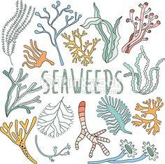 ... Vessel,Outline,Painted Image,Plant,Reef,Sea,Sea Life,Seaweed,Sketch,Summer,Tropical Climate,Undersea,Underwater,Vector,Water,White,WildlifePhotographer ...