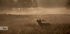 autumn is calling.. by Mark Bridger on 500px