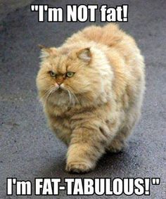 Not Fat....Fat-Tabulous