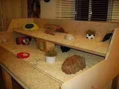 Second level for guinea pigs to jump up on or add ramp.