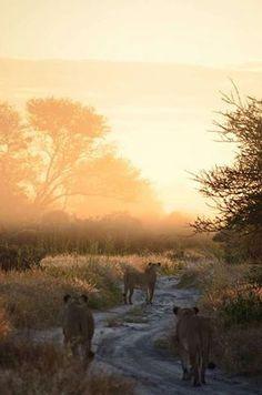 Deception Valley Lodge, Central Kalahari Game Reserve, Botswana