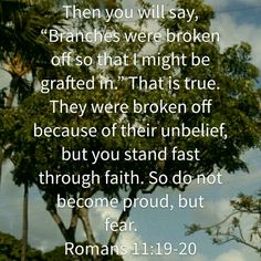 Image result for romans 11:19-20