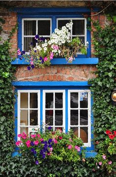 Ireland, County Clare. Flower box windows County Clare is where my roots are. No wonder I love this kind of thing!!