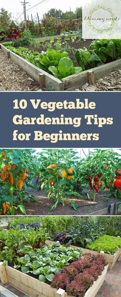 10 Vegetable Gardening Hacks Beginners NEED to Know - Page 6 of 6 - Bless My Weeds