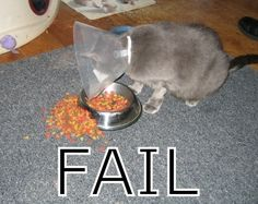 Epic Fail Photo: This Photo was uploaded by CaelAttracted. Find other Epic Fail pictures and photos or upload your own with Photobucket free image and v. Funny Animal Pictures, Funny Animals, Cute Animals, Fail Pictures, Animal Funnies, Funniest Pictures, Weird Pictures, Animals Beautiful, Funny Cat Fails