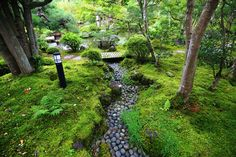 Clean moss and stone Kyoto Nanzenji DaiYasushinoki
