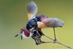 The bug slayer by nikolarahme