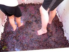 Grape stomping at Westcave Cellars, near Dripping Springs