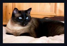 Lise Cats, Animals, Gatos, Animales, Animaux, Animal, Cat, Animais, Kitty
