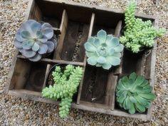 succulents bottle box