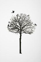 Silhouette Tree Wall Decal  #UrbanOutfitters
