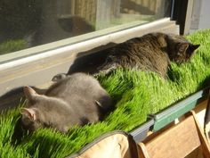 3 Safe Window Ideas for Cats: Window Box, Cat Solarium & Window Sill Perch - Uni. - 3 Safe Window Ideas for Cats: Window Box, Cat Solarium & Window Sill Perch – Unique Balcony & Gar - Animals And Pets, Cute Animals, Gato Gif, Cat Garden, Balcony Garden, Garden Fences, Cat Playground, Cat Room, Outdoor Cats