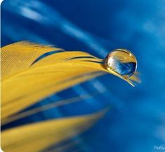 Search: blue and yellow Gold Water, Macro Shots, Water Art, Dew Drops, Water Droplets, Blue Yellow, Navy Blue, Orange, Crystal Ball