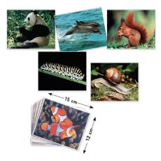 Photo Box- Animals