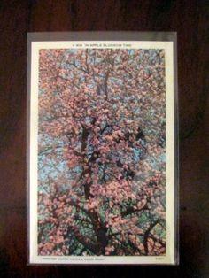 Four Seasons Linen Postcards by barbsbin on Etsy, $8.99