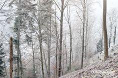 365 Tage Fotochallenge: Tag 357 - Winterwald