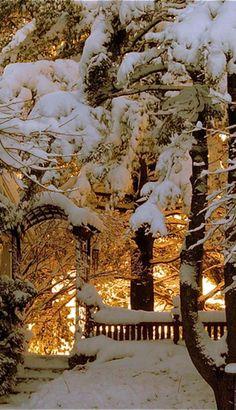 ❄️ Winter gold is so magic ❄️