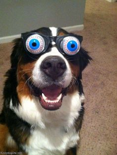 I Think His Eyes are Stuck Like That. - Funny pictures and memes of dogs doing and implying things. If you thought you couldn't possible love dogs anymore, this might prove you wrong. Funny Dog Memes, Funny Dogs, Cute Dogs, Love My Dog, Funny Animal Pictures, Funny Animals, Cute Animals, Dog Pictures, Dog Photos