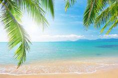 Tropical Palm Beach by Print a Wallpaper