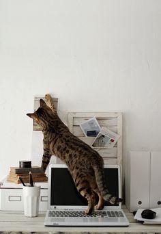 Fifou invadiendo la oficina =P @Artefacta