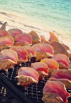 West End is the conch capital of The Bahamas! (Grand Bahama Island) And the pink hue inside of a conch shell is breathtaking. Cruise Travel, Cruise Vacation, Dream Vacations, Vacation Spots, Bahamas Vacation, Bahamas Cruise, Nassau Bahamas, Bahamas Island, Island Beach