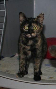 LILI - Gato adoptado - AsoKa el Grande