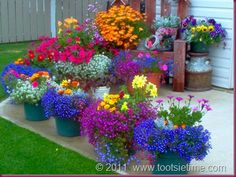 gorgeous container flowers - I love flowers. Container Flowers, Container Plants, Container Gardening, Gardening Tips, Gardening Gloves, Succulent Containers, Lawn And Garden, Garden Art, Garden Plants