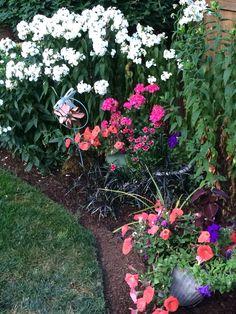 Phlox and blooming pots.
