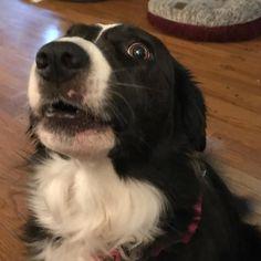 Just barking. Becaus