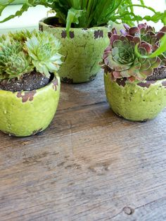 Find small garden ideas at HGTV.com with tips for planting pots with fruits, vegetables, blooming flowers, shrubs and even trees.