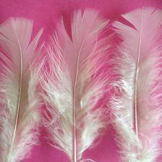 Lot de 10 plumes pied plat blanc cassé