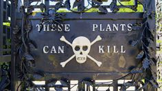 Deadliest Garden in the World #gardening #garden #gardens #DIY #landscaping #home #horticulture #flowers #gardenchat #roses #nature