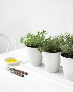 Indoor Herb Garden Tricks for the Most Lush Windowsill on the Block - Modern The Block, Herb Pots, Garden Pots, Garden Ideas, Vegetable Garden, Lush, Gemüseanbau In Kübeln, Household Plants, Strawberry Planters