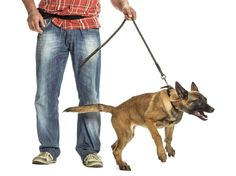 Do you dread walking your dog because you end up apologizing to everyone you meet? As soon as your dog gets within reach, is she lunging, jumping, and pulling you over, while clobbering innocent passerby? We feel your pain. Leash lunging is …