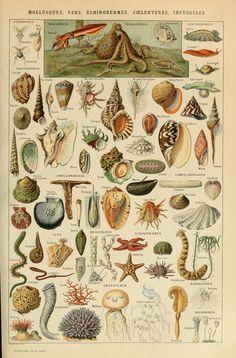 Le Larousse pour tous : Mollusques, Vers, Échinodermes, Coelentérés, Infusoires