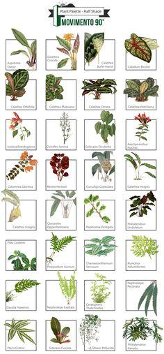 Vegetation Chart