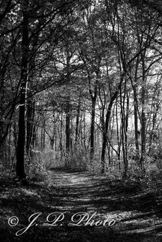 16x24 photograph  Through the woods by JennyPhyl on Etsy, $36.00