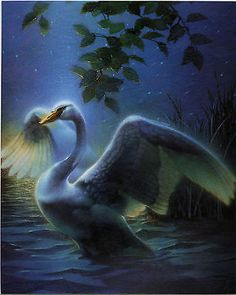 Swans By Moonlight >> 28 Best Swans Images In 2017 Moonlight Swan Swans