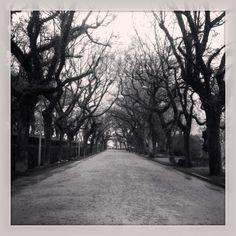 Un parque en invierno / A park in winter.  By Daudiovisual.