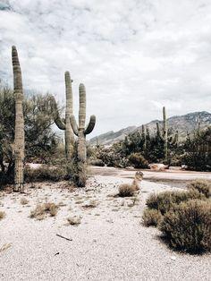 Pretty cactus scene arizona cactus desert is part of Travel - Desert Aesthetic, Travel Aesthetic, Voyager C'est Vivre, Desert Dream, Desert Life, Adventure Is Out There, Belle Photo, Aesthetic Pictures, The Great Outdoors