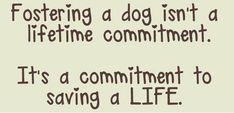 Friends of Lake County Animal Services ~ Tavares, FL Page Liked · November 7, 2014 · Edited · LCAS is now beyond full. Please if you can even temporary foster it would help. Tavares, FL - Lake County Animal Services has many pets currently in need of temporary foster homes. LCAS is FULL of dogs & cats who would love to be in a foster home!!! Puppy, dog, kitten and cat fosters needed. If you have the time, room and love to help a pet in need please contact them for further details Please do…