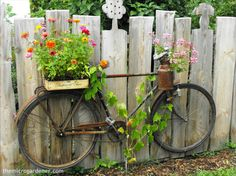 This old bicycle was mounted on the fence as GARDEN ART with pretty flowers planted in rustic containers. The frame and wheel spokes were the perfect trellis for the climbing grape vine. Get creative with YOUR container garden projects! For more tips, easy DIY tutorials