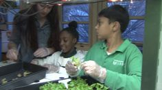 Students from the Urban Assembly Unison School are harvesting cucumbers at a farm in Brooklyn. And they didn't even have to leave their building in Clinton Hill to get there. This winter crop was...