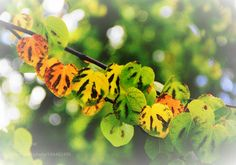 LEAVES by zyichun2011 #nature #mothernature #travel #traveling #vacation #visiting #trip #holiday #tourism #tourist #photooftheday #amazing #picoftheday