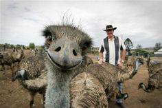 ostrich photo bomb