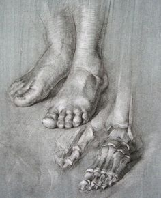 Anatomia pies Human Anatomy Drawing, Human Body Anatomy, Anatomy Art, Leg Anatomy, Anatomy Sketches, Body Sketches, Feet Drawing, Life Drawing, Drawing Hands