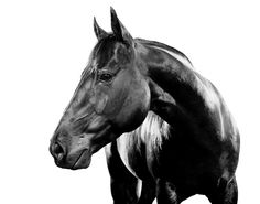 Resultado de imagen de horses details