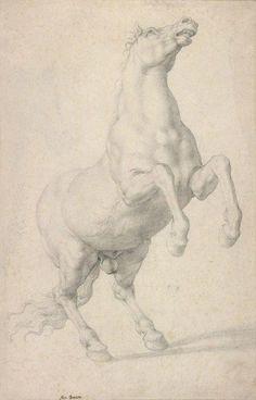 Agnolo Bronzino (1503–1573), Rearing Horse, ca. 1546–48. Black chalk