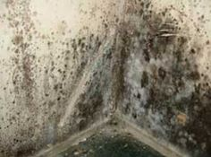 Black Mold In Walls how to remove black mold | remove black mold