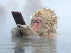 Wildlife Photographer des Jahres 2014 (© Stephan Tuengler)